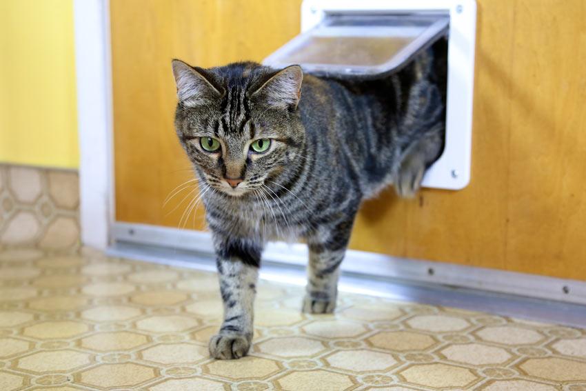 cat-flap